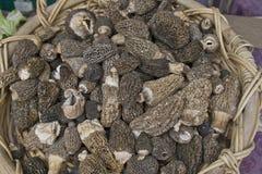 Morchella Morel Mushrooms Stock Photography