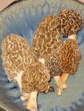 Morcheln in einer Aerni-Schüssel Stockfotos