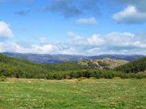 Morcuera Scenics. Nice shoot of the pasture field of the Morcuera surroundings Stock Images