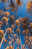 Mordaga autumn scenery. The hulunbuir autumn in China Royalty Free Stock Photo