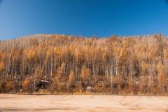 Mordaga autumn scenery. The hulunbuir autumn in China Stock Image