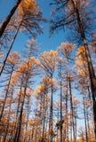 Mordaga-Herbstlandschaft Stockbild