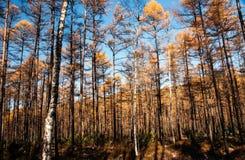 Mordaga-Herbstlandschaft Lizenzfreie Stockbilder