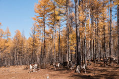 Mordaga-Herbstlandschaft Stockfotografie