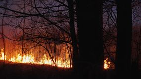 Mordbrand i trät, skog i flamma stock video