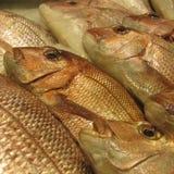 Mordedores de oro en un mercado de pescados Imagenes de archivo