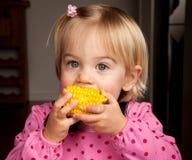 Mordedura del maíz Imágenes de archivo libres de regalías