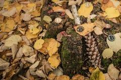 A mordu la pièce de monnaie sur l'au sol d'automne images libres de droits
