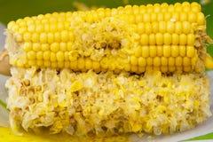 Mordu maïs Photos stock