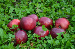 More apples Royalty Free Stock Photography