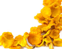 More chanterelles Stock Photo