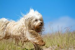 More cheerful Wet Dog Royalty Free Stock Photography