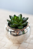 More closeup of green succulent. More Close up of green small succulent in silver pot on white woven mat with blurred blackground Stock Photography