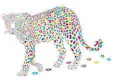 More colorful leopard Stock Images