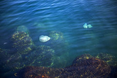 More depth jellyfish floating in the sea lagoon as a result of t Royalty Free Stock Photos