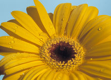 More flower pictures! Royalty Free Stock Images