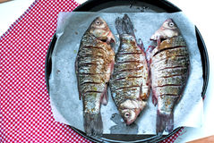 More fresh carp on a baking before baking closeup. river fish Stock Image