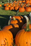 More Pumpkins Royalty Free Stock Photo