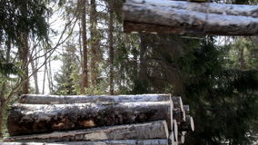 More snow covered logs are added in the pile. Of logs where most of them are covered in snow. Hydraulic instrument. Machine industry stock footage