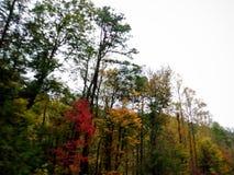 More than Georgia Pines in Autumn