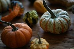 Composition with halloween pumpkins Stock Image