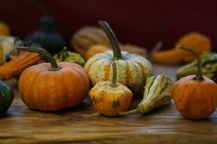 Composition with halloween pumpkins Royalty Free Stock Photo