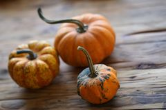 Composition with halloween pumpkins Royalty Free Stock Photos