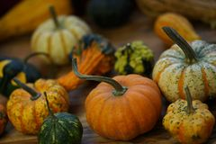 Composition with halloween pumpkins Royalty Free Stock Images