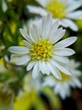 More white flower. Boque small garden plants nature royalty free stock image