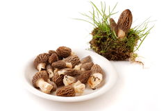 Morel. Large Yellow Morel Mushroom. morchella esculenta. Valuable, edible fungi Stock Photos