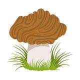 Morel, edible forest mushroom. Colorful cartoon illustration Royalty Free Stock Image