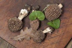 Morel fungus Royalty Free Stock Photo
