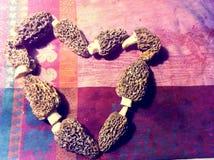 Morel love Stock Photo