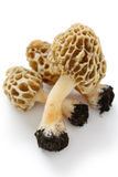 Morel,morille. Edible mushrooms on a white background Stock Images