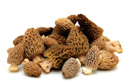 Morel Mushroom. S from the California sierra mountains found only in the springtime and highly sought after by gourmet chefs Stock Photos