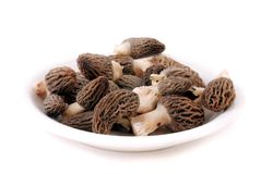 Morel Royalty Free Stock Photo