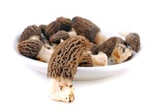 Morel Stock Image