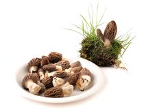 Morel Royalty Free Stock Photos