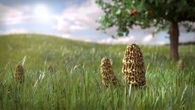 Morel Mushroom Scene Stock Image