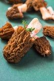 Morel mushroom -Verpa Bohemica,closeup. Stock Photography