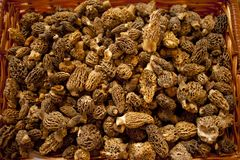 Morel mushrooms Royalty Free Stock Photos
