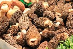 Free Morel Mushrooms At A Farmer&x27;s Market. Royalty Free Stock Photo - 20424415