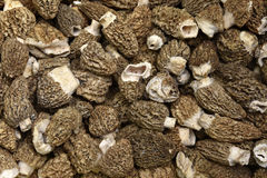 Morel Mushrooms Stock Photography