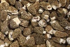 Morel Mushrooms. Close Up Of Morel Mushrooms Stock Photography