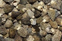 Morel Mushrooms. Close Up Of Morel Mushrooms Royalty Free Stock Photo