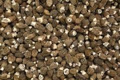 Morel Mushrooms. Close Up Of Natural Morel Mushrooms Royalty Free Stock Photo