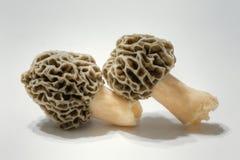 Morel Mushrooms. A close-up view of morel mushrooms Stock Photography