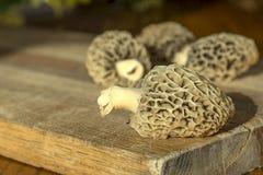 Morel plocka svamp på skärbräda, all naturligt och valt i Arkivbild