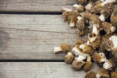 Morel plocka svamp på träbakgrund Arkivfoton