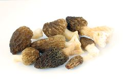 Morel on a white background Royalty Free Stock Image